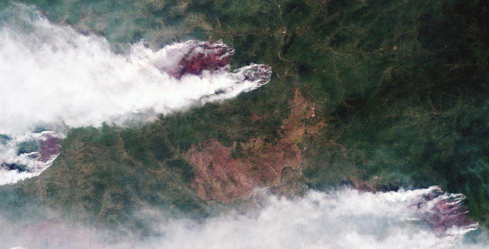 лесные пожары