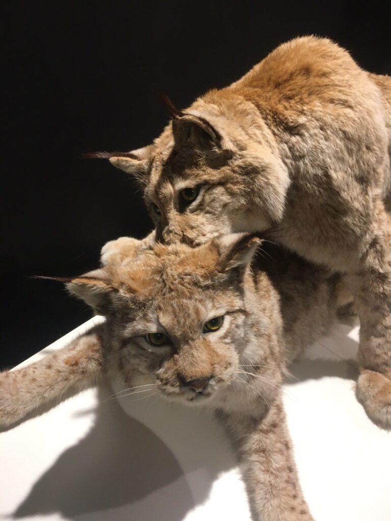 Выставка: спаривание животных