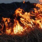 80 тысяч рублей взыскали с поджигателей травы в Новосибирской области