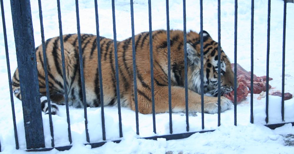 Новосибирский зоопарк. Фото: Сергей Завражных