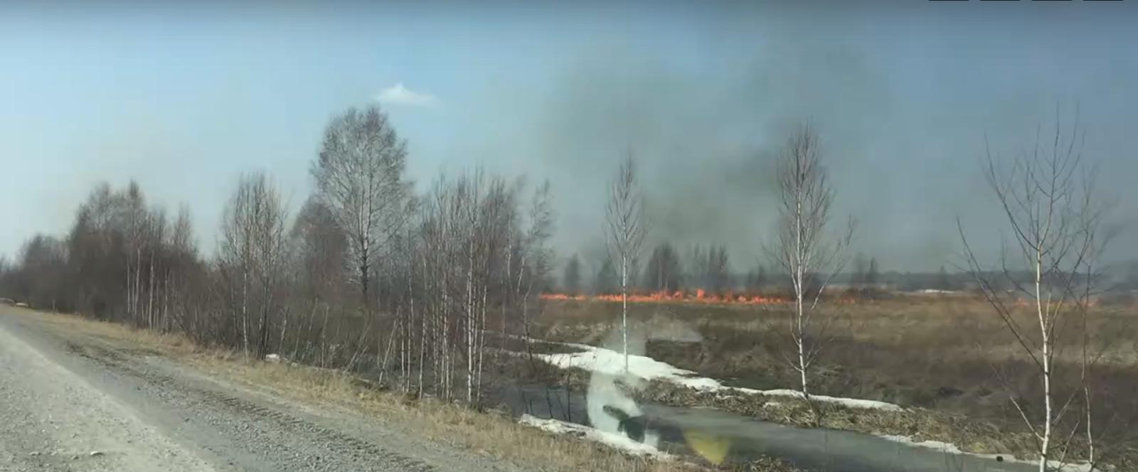 Чановский район Новосибирской области, 11 апреля 2020 года