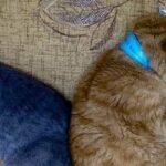Кемеровская кошка с протезами не может уехать домой