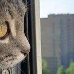 Жителей Новосибирской области предупредили об аномальной жаре на этой неделе