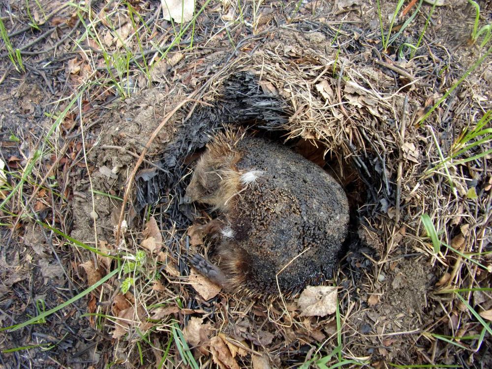 Пал травы убивает мелких животных и птиц
