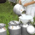 В Новосибирской области выросло производство баранины и сухого молока