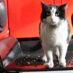 Спасенный на пожаре кот Гидрант получает поздравления в День кошек