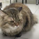 Кошка выжила после стирки в машинке