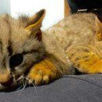 Единственные в России ржаво-рыжие кошки стали родителями в Новосибирске