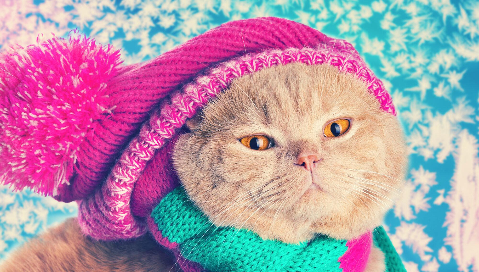 кот в теплой шапке