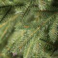 веточки елки