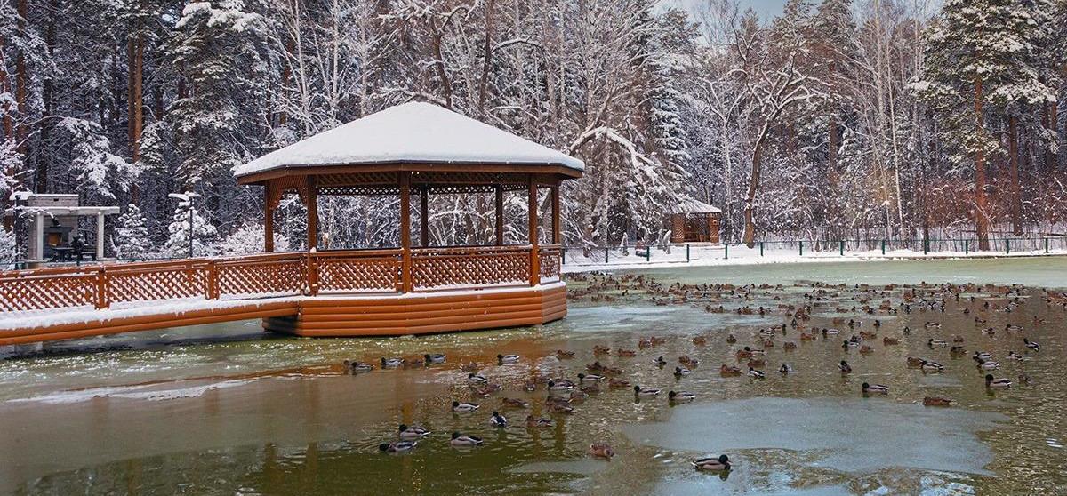 Уютная беседка на берегу озера в Новосибирском зоопарке. Фото: Владимир Габов