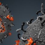 Центр исследования вирусов появится в Сибири