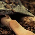 труп лес убийство раскрыто