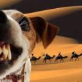 Собака лает, караван идет