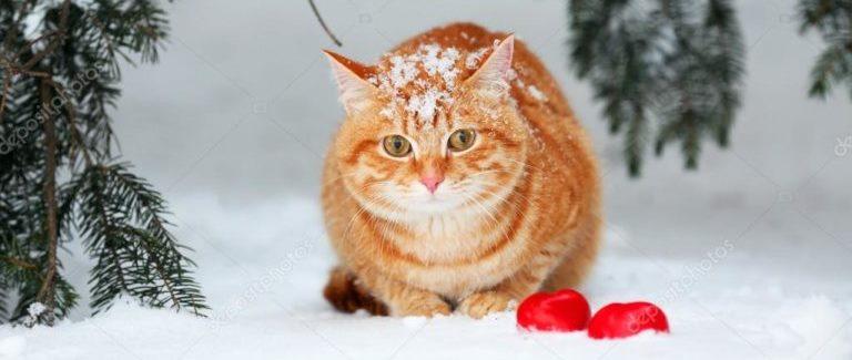 кот, погода