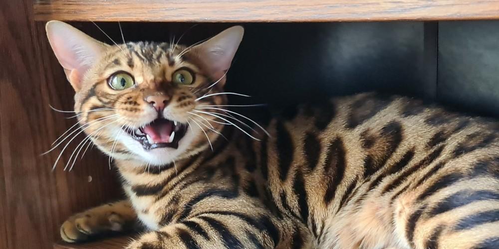 -Новость Коты ругается сибирский информационный портал 28 Декабрь