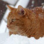 Рыжий кот сидит в снегу