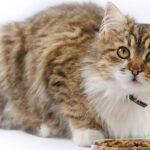 Nestle строит под Бердском фабрику кормов для домашних животных