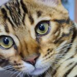 Кот позвал спасателей спасти своего хозяина