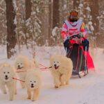 Гонкам на собачьих упряжках не помешали ни мороз, ни коронавирус