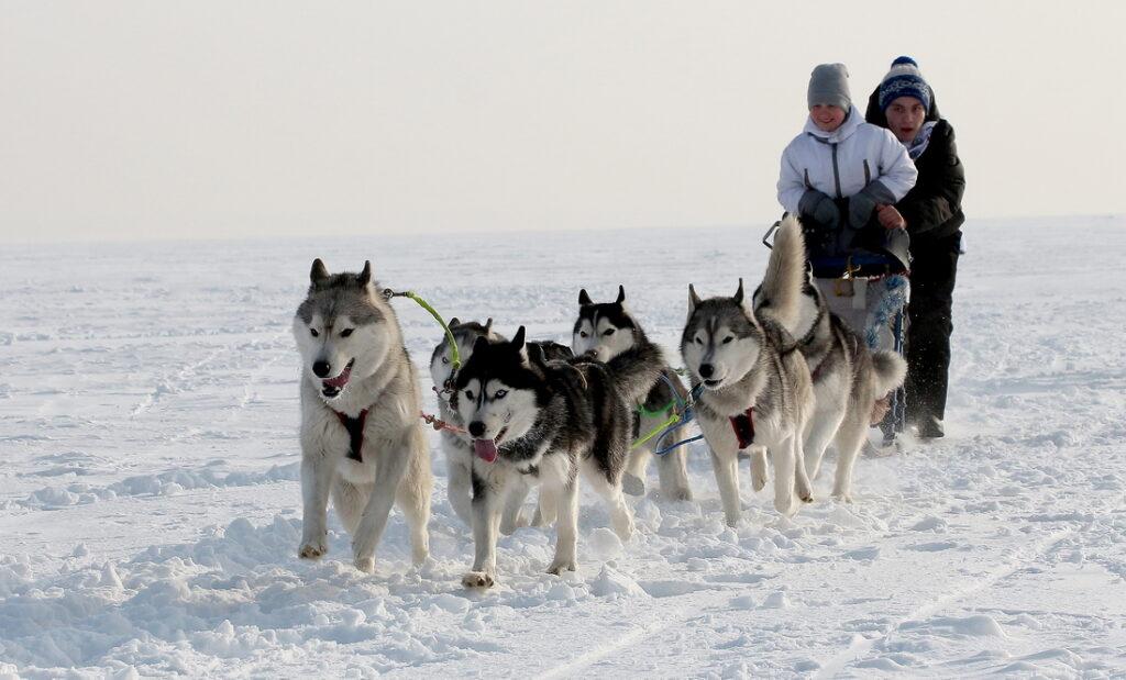 Иглу. Город эскимосов