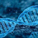 генетика, ДНК