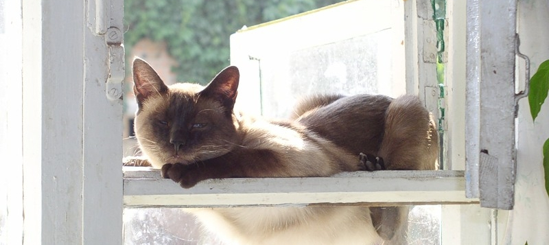 кот кража