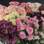 Не дадим испортить праздник. 600 цветов из Колумбии и Италии оказались не безопасны.