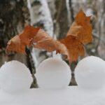 снежки, зима