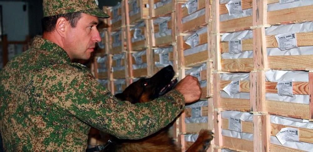 собака на Алтайской таможне