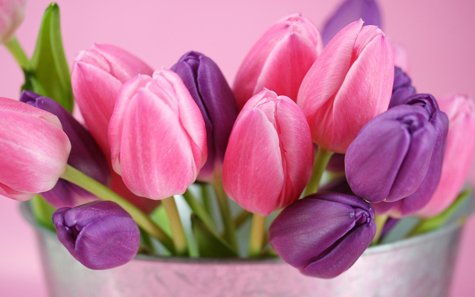 Цветы, нежность, март, женщины, девушки