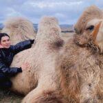 верблюд из Крыма с артритом