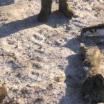 кости мамонта, находка
