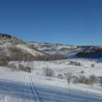 Почему нынешней зимой оседлые птицы испытывают большие трудности в Тигирекском заповеднике?