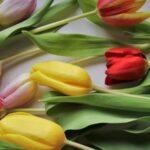 Первые лица СФО, Новосибирской области и города поздравили женщин с праздником
