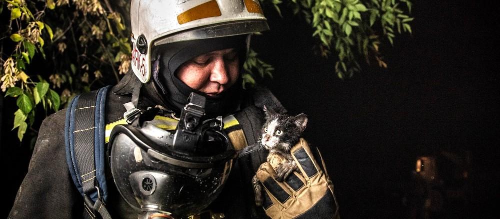 Кот Гидрант день кошек россии спасение кота