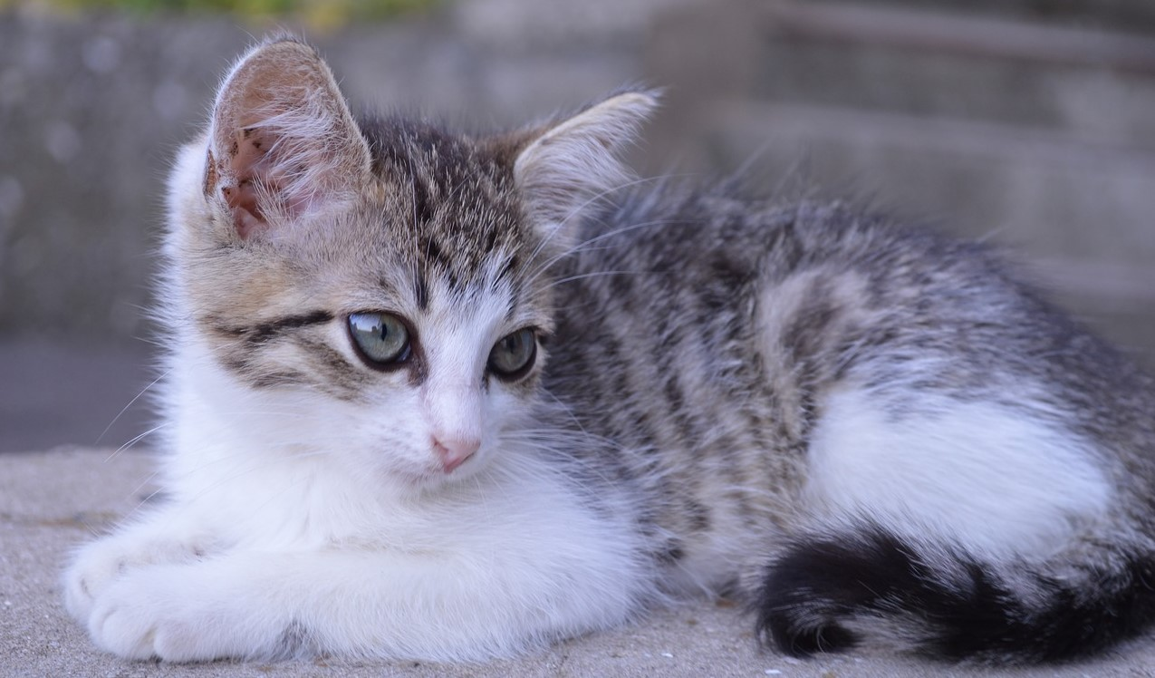 Котёнок Томск раздача бездомных животных ярмарка