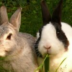 Кролики с молотка не пойдут. В Томской области приставы описали бизнес за долг по кредиту