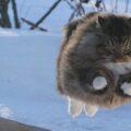 погода, кот