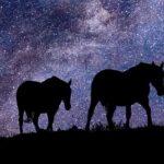 лошадь, ночь, звезды