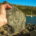 200 уникальных палеонтологических находок увидят жители и гости Барнаула