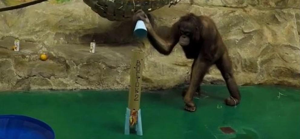 обезьяна в День космонавтики