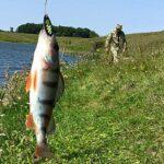 Есть вопрос: когда начнётся нерестовый запрет на рыбалку в Новосибирской области?