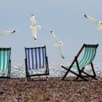 отдых, море, чайки