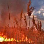 Пожаров в Новосибирской области стало в четыре раза больше