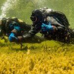 Первую в России подводную экотропу предлагают проплыть на Алтае