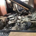 В Кемерово из-за взрыва газа в приюте погибли собаки