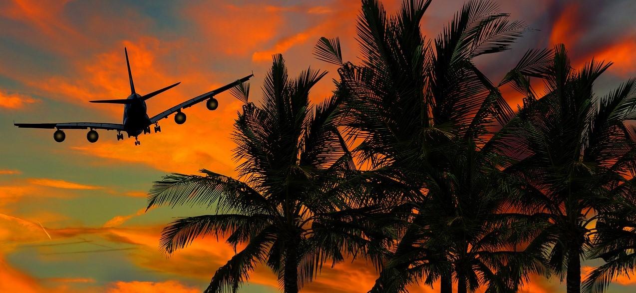 полет1, пальмы