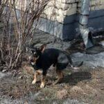 В Новокузнецке третий день около магазина сидит собака и ждёт хозяина (телефон)
