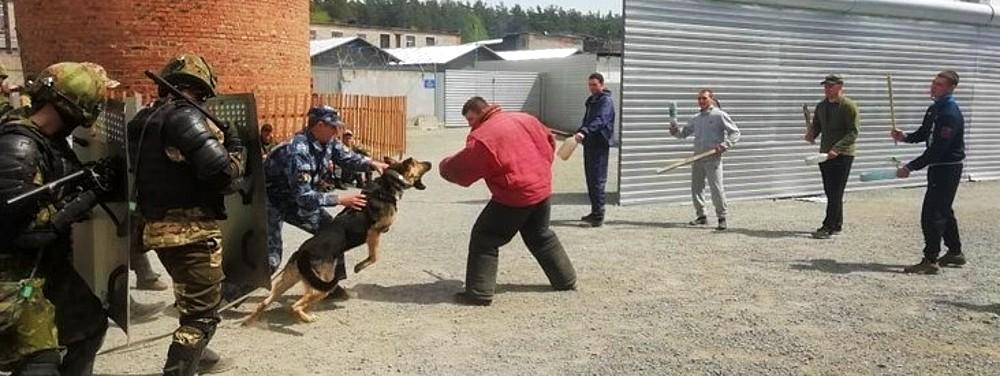 собаки на экзамене